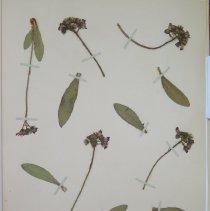 Image of Botany - 94.0339.172