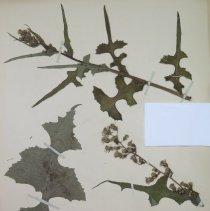 Image of Botany - 94.0343.176