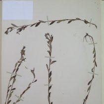 Image of Botany - 94.0347.180
