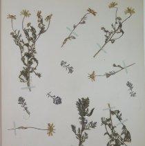 Image of Botany - 94.0358.191