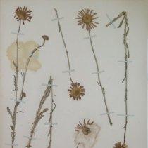 Image of Botany - 94.0359.192