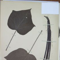 Image of Botany - 94.0367.200