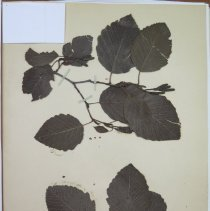 Image of Botany - 94.0373.206