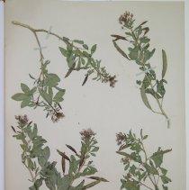 Image of Botany - 94.0429.261