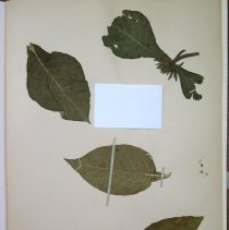 Image of Botany - 94.0573.405