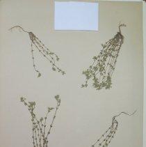 Image of Botany - 94.0593.425