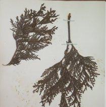 Image of Botany - 94.0632.464