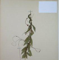 Image of Botany - 94.0637.469