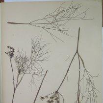 Image of Botany - 95.0537.1160