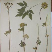 Image of Botany - 95.0542.1165
