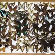 Image of Insects - 91.0229.229