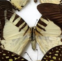 Image of Insects - 91.0231.231