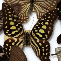 Image of Insects - 91.0237.237
