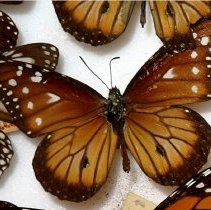 Image of Insects - 92.0335.782