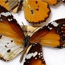 Image of Insects - 92.0534.981