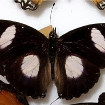 Image of Insects - 92.0597.1044
