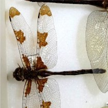 Image of Insects - 92.1080.1548