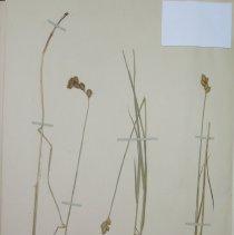 Image of Botany - 94.0449.281