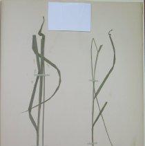 Image of Botany - 94.0502.334