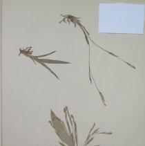 Image of Botany - 94.0516.348