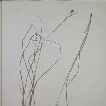 Image of Botany - 94.0549.381