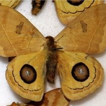 Image of Insects - 91.0040.40