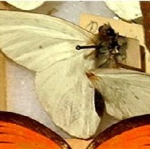 Image of Insects - 91.0285.285
