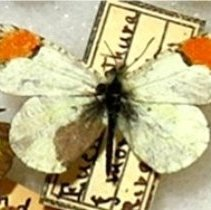 Image of Insects - 92.0138.587