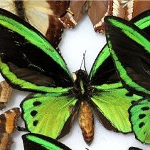 Image of Insects - 92.0612.1059