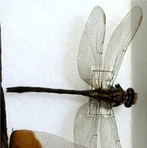 Image of Insects - 92.1077.1545