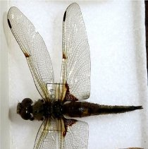 Image of Insects - 92.1089.1557