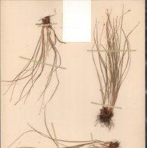 Image of Botany - 94.0455.287