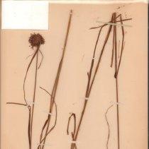Image of Botany - 94.0459.291
