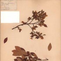 Image of Botany - 94.0665.497