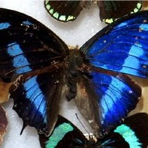 Image of Insects - 91.0102.102