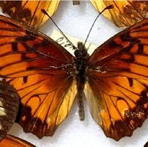 Image of Insects - 91.0212.212