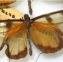 Image of Insects - 91.0213.213