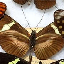 Image of Insects - 91.0329.329