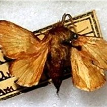 Image of Insects - 91.0442.442