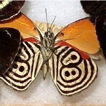 Image of Insects - 92.0213.662