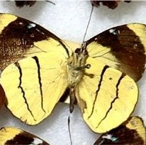 Image of Insects - 92.0217.666