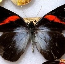 Image of Insects - 92.0351.798