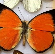 Image of Insects - 92.0508.955