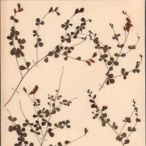 Image of Botany - 94.0707.539
