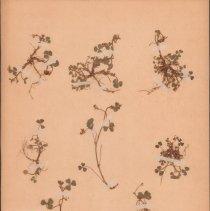 Image of Botany - 94.0711.543