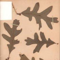 Image of Botany - 94.0765.560