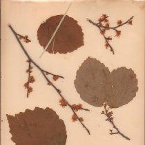 Image of Botany - 94.0788.583
