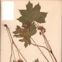 Image of Botany - 94.0792.587