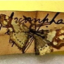 Image of Insects - 91.0088.88