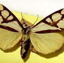 Image of Insects - 91.0397.397